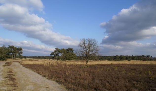 Landschotse Heide